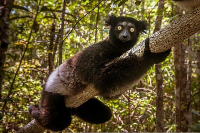 بشر عامل مفقود شدن بیش از 300 گونه پستاندار