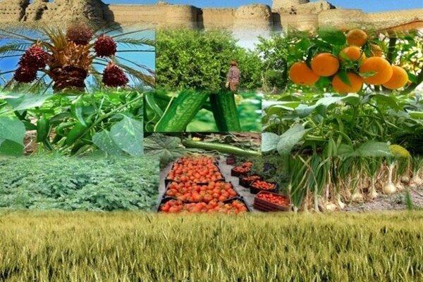 در حوزه کشاورزی و نظام مهندسی به دنبال هم پیوندی نظام بازار با فراوری هستیم