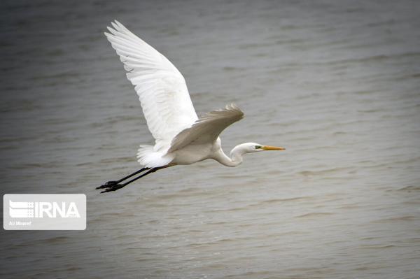 خبرنگاران اوج و فرود پرندگان مهاجر در حصار تهدیدهای محیط زیستی